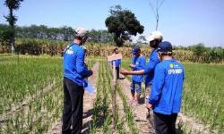 Kabupaten Cirebon Kekurangan Penyuluh Pertanian