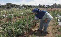 Petani Binaan Rumah Zakat Siap Panen