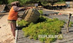 Bisnis Resi Gudang Rumput Laut Makin Bergairah