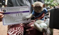 Ribuan Hewan di Banyuwangi Bakal Dapatkan Vaksin Rabies