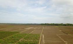 Kementan Akan Bangun Food Estate Hortikultura di Jawa