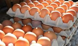 Pasokan Melimpah, Harga Telur dan Ayam Jakarta Turun