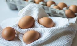 Cara Mengenali Telur Mulai Membusuk