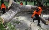 (Ilustrasi) Batang pohon yang tumbang akibat angin kencang, yang menjadi salah satu pertanda pancaroba atau peralihan musim.