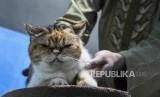 Petugas merawat kucing yang dititipkan di rumah penitipan kucing Happy Cat House, Jalan Sadang Serang, Kota Bandung, Kamis (16/5).