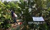 Pengunjung melihat-lihat tanaman yang dijual saat pameran flora dan fauna 2018 di Taman Lapangan Banteng, Jakarta, Ahad (19/8).