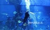 Jakarta Aquarium. Mermaid Show akan menghadirkan putri duyung sebagai pengibar bendera merah putih.