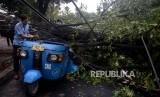 Warga melihat bajaj yang tertimpa pohon yang tumbang di Jalan Perwira, Jakarta Pusat, Selasa (21/11).