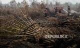 Sejumlah petugas Manggala Agni bersama anggota TNI berusaha melakukan pendinginan saat kebakaran hutan di Desa Rimbo Panjang, Kabupaten Kampar, Riau, Selasa (17/9).