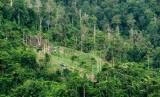 Prakarsa Lintas Agama Kampanye Setop Penggundulan Hutan. Foto: Ilustrasi Hutan