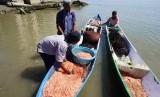 Nelayan membawa udang hasil tangkapan di atas perahunya di Pantai Lere, Palu, Sulawesi Tengah, Rabu (28/8/2019).