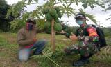 Budidaya Pepaya di Dusun Duren Desa Gunan Slogohimo Wonogiri. Dok. Kodim 0728