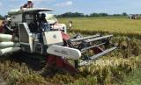 Pekerja memanen padi di Kota Madiun, Jawa Timur, Kamis (9/4/2020). Sebagian petani di wilayah tersebut memasuki musim panen padi.