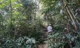 Hutan adat Mude Ayek Tebat Benawa di Dusun Tebat Benawa, Kelurahan Penjalang Kecamatan Dempo Selatan, Kota Pagaralam, SUmatera Selatan (Sumsel).