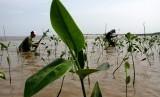 Sejumlah warga menanam bibit mangrove di Kecamatan Tamalanrea, Makassar, Sulawesi Selatan, Sabtu (23/3/2019).