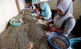 Pekerja menyortir kopi arabika gayo disalah satu tempat penampungan di Takengon, Aceh Tengah, Aceh, Ahad (24/11/2019).