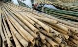 Bambu (ilustrasi). Pemkab Lebak melalui Dinas Pariwisata menggelar Lebak Bamboo Festival 2019 menggandeng pengrajin bambu.