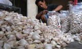Pekerja menyortir bawang putih asal China di pusat jual beli bawang kompleks pasar Legi Parakan, Temanggung, Jateng, Selasa (25/2/2020). Kementan terbitkan RPIH untuk impor komoditas bawang demi jaga ketahanan pangan