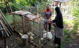 Majelis Ta'lim Al Jannah Kampung islam Lebah menerima bantuan bibit anak ayam dari Rumah Zakat, Kamis (23/7). Bantuan bibit diberikan sebagai bagian dari program ketahanan pangan yang digulirkan oleh Rumah Zakat di desa berdaya.