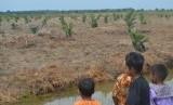 Anak-anak melihat lahan yang baru pertama kali ditanam sawit di Desa Air Kumbang Bakti, Kecamatan Air Kumbang, Kabupaten Banyuasin, Sumatra Selatan, Senin (15/10).
