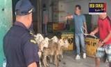 Bea Cukai Teluk Nibung telah memfasilitasi ekspor 370 ekor domba di 2020