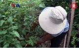 Berjemur bisa dilakukan sambil melakukan aktivitas seperti berkebun. Berjemur memberi manfaat asupan vitamin D di tubuh.