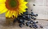 Biji bunga matahari.