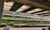 Buce merupakan salah satu tanaman air bernilai ekonomis tinggi.