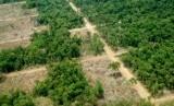 Deforestasi Hutan di Papua. Tugas menghijaukan kembali bumi tak boleh hanya diemban Pemerintah