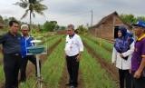 Direktur Jenderal Hortikuktura, Suwandi saat mengunjungi wisata agro di Bantul, Jum'at (9/11)