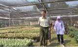 Dirjen Hortikultura Suwandi meninjau produksi tanaman hias kualitas ekspor di Bogor