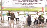 Gubernur Jawa Timur (Jatim), Khofifah Indar Parawansa melakukan Gerakan Percepatan Tanam Padi pada musim tanam II atau musim kemarau guna mewujudkan ketahanan pangan. Ini sebagai langkah nyata agar terhindar dari krisis pangan sebagai dampak dari pandami Covid 19, bahkan FAO memberikan peringatan bahwa akibat pandemi ini, dunia akan mengalami krisis pangan.