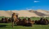 Gurun Gobi di Mongolia