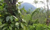 Hutan Adat / Ilustrasi
