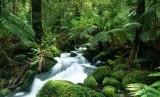 Hutan Hujan Amazon Amerika