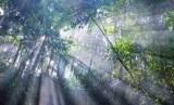 Hutan Hujan (ilustrasi)