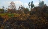 Tokoh Lintas Agama di Indonesia Dorong Pelestarian Hutan. Foto: ilustrasi kebakaran hutan dan lahan