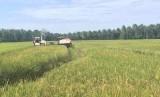 Ilustrasi lahan pertanian di Papua