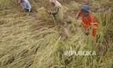 Kementan targetkan produksi padi 2020 mengacu pada kerangka sampel area.