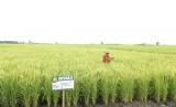 Rasulullah SAW Anjurkan Bertani dan Ancaman Dajjal Kelak