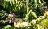 Ilustrasi wisata agro dan edukasi. Lapas Nunukan sedang dalam tahap penataan menjadi destinasi wisata agro dan edukasi.