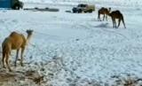 Kawasan Tabuk, Arab Saudi diselimuti salju