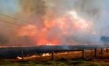 Kebakaran di Australia, ilustrasi