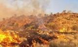 Kebakaran di pedalaman Australia Selatan dimulai pada Kamis (8/2) dan telah membakar padang ilalang dan semak belukar.