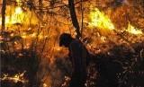 Kebakaran hutan (ilustrasi). Kemunculan wabah penyakit baru tak lepas dari makin berkurangnya luas hutan di dunia.