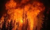 Kebakaran hutan/ilustrasi