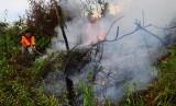 kebakaran lahan gambut (Ilustrasi)