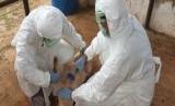Kementan berikan pelatihan petugas kesehatan hewan dari 17 provinsi yang memiliki populasi babi tinggi dan mempunyai risiko terkena African Swine Fever (ASF)