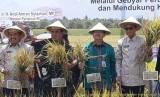 Kementerian Pertanian (Kementan) menggelar Gebyar Perbenihan Tanaman Pangan Tingkat Nasional VI Tahun 2018 yang dilaksanakan pada 23 - 26 Oktober 2018 di Maros, Sulawesi Selatan