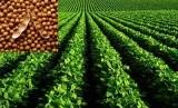 Lahan pertanian. Program asuransi pertanian tidak mencapai target pada tahun ini.